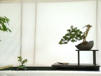 selection rhone alpes bonsai 2012 21
