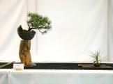 selection rhone alpes bonsai 2012 34