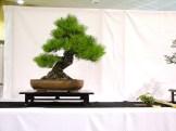 selection rhone alpes bonsai 2012 50