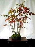 selection rhone alpes bonsai 2012 53