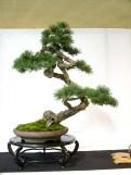 selection rhone alpes bonsai 2012 62