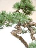 selection rhone alpes bonsai 2012 63