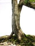 selection rhone alpes bonsai 2012 68