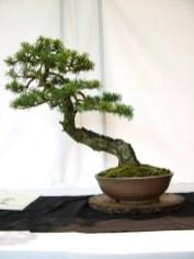 selection rhone alpes bonsai 2012 88