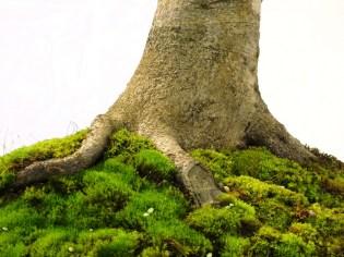 selection rhone alpes bonsai 2012 94