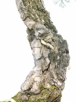 selection rhone alpes bonsai 2012 96