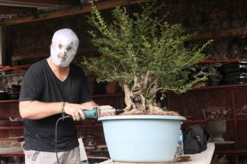 style bonsai mexicain