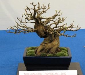noelanders trophy 2013 - 32