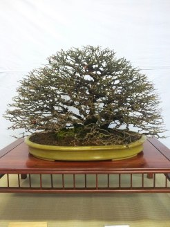 Kokufu 2013 exposition chaenomeles