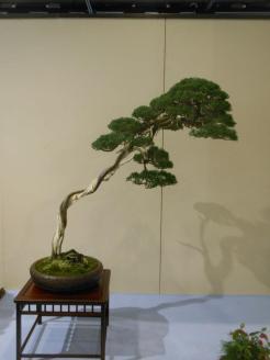 Kokufu 2013 exposition juniperus