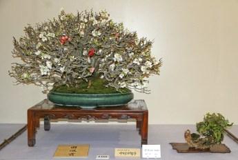 Kokufu 2013 prize - chaenomeles japonica
