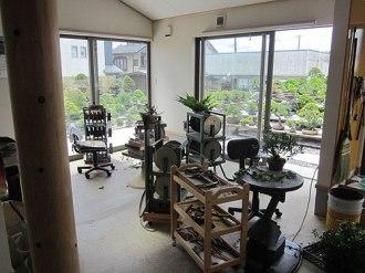 apprendre le bonsai au japon