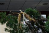 EBA2013 demonstration hiramatsu - 022