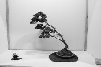 EBA2013 nicola crivelli - juniperus chinensis 16