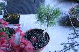 destination bonsai - christophe richy - 112