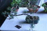 destination bonsai - christophe richy - 117
