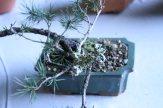 destination bonsai - christophe richy - 118