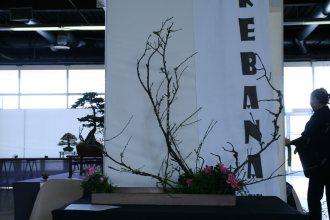 ikebana lorraine - roseau noir - 35