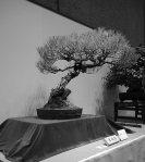 NB kokufu-ten 2013 - 20