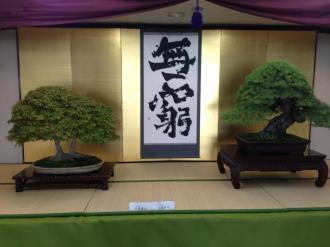 Ryokufu bonsaï-ten 01