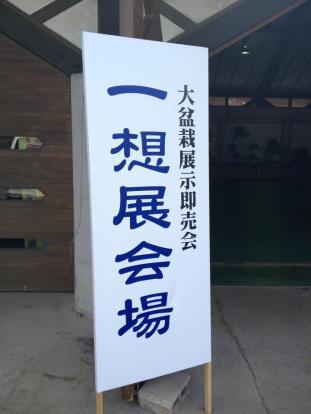 exposition bonsai japon 01 masato yamakami