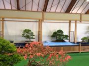 exposition bonsai japon 02 masato yamakami
