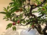 bonsai mori exposition 03
