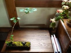 bonsai mori exposition 22