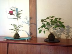 bonsai mori exposition 23 kokedama