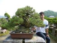 isao omachi bonsai pinus