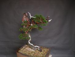 pin sylvestre apres mise en forme