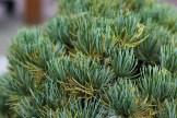 pin blanc han-kengai avant nettoyage détail