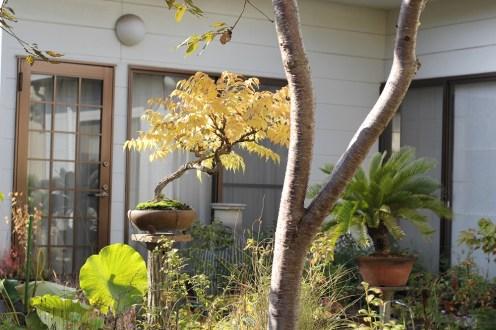 couleurs automne kyuka-en