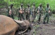AFRIQUE DU SUD/KENYA : Forte mobilisation anti-braconnage en Afrique du Sud et au Kenya