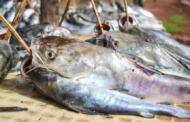 Le fléau de la pêche illégale en Guinée-Bissau