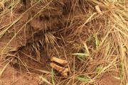 RDC : dix nouvelles fosses communes découvertes au Kasaï