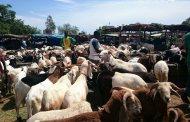 TABASKI 2017 : moutons cherchent acheteurs