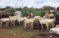 TABASKI 2018: Vendeurs de moutons cherchent clients