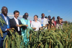 BURKINA FASO-CHINE : du mil hybride pour la sécurité alimentaire