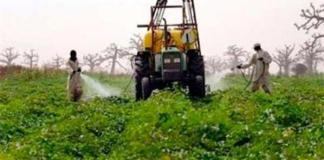 Un agenda scientifique pour l'agriculture en Afrique