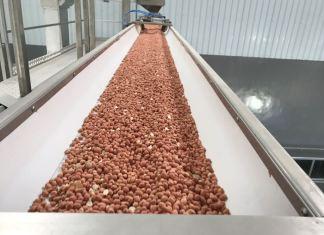 Maodo Sarr, usine de décorticage d'arachide