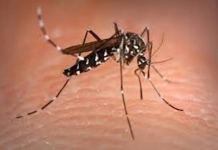 La Dengue à Louga