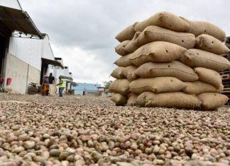 Plus de 9000 tonnes d'anacardes au port de Dakar