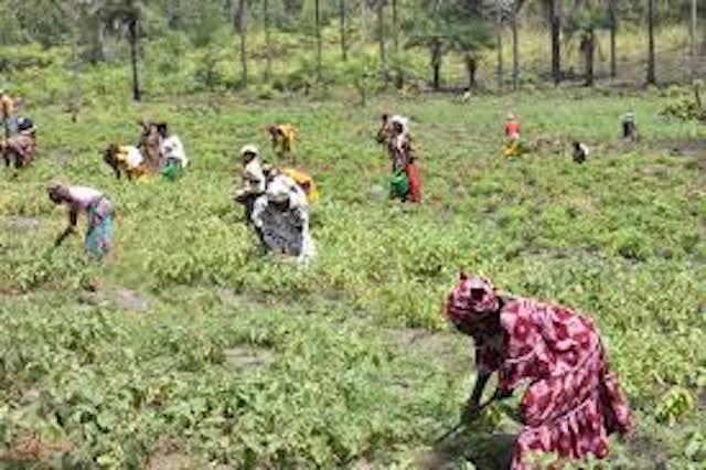 Le renforcement des moyens de subsistance des femmes à Tambacounda