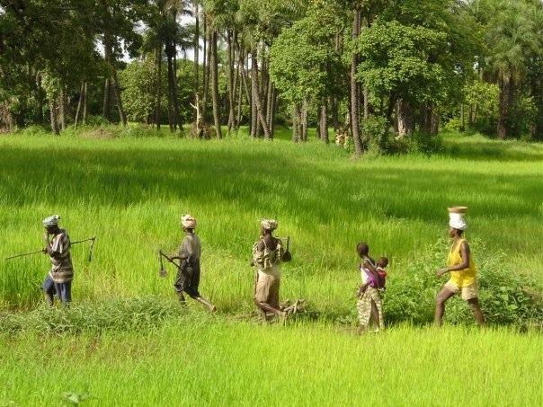 Initiative Priorité Casamance