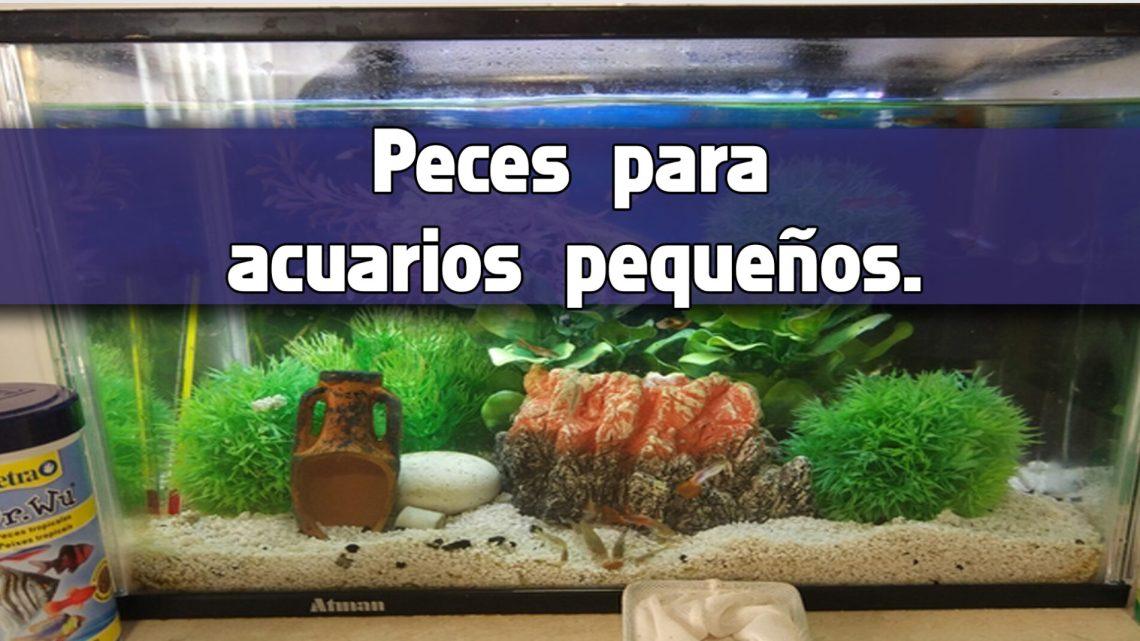 8 opciones de peces para acuarios pequeños.