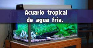 Acuario tropical de agua fría.