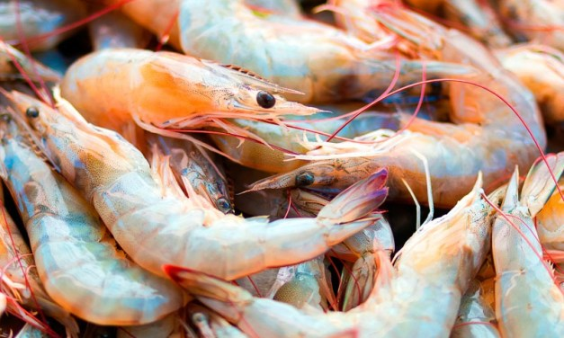 China importó más de $ 2 mil millones de camarones en 2019