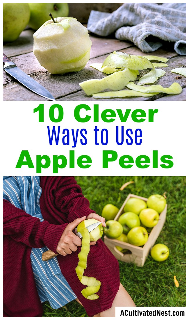 10 Clever Ways to Use Apple Peels- If you have a lot of apple peels left over from your meal prep, don't throw them out! Instead, put them to use with these clever ways to use apple peels! | apple skins, ways to use apples, use all of an apple, reduce food waste, frugal living, #frugalLiving #apples #ACultivatedNest