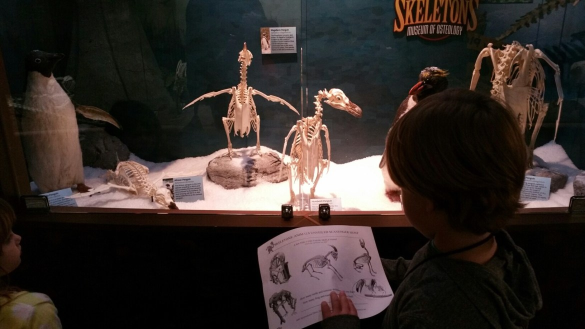 Things to do in Orlando with kids | Idrive 360 with kids | things to do on I-Drive | International Drive | Skeletons Museum Orlando | family travel | skeletons: animals unveiled | acupful.com | Mandy Carter | travel with kids: SKELTON Museum Orlando | childrens museums |